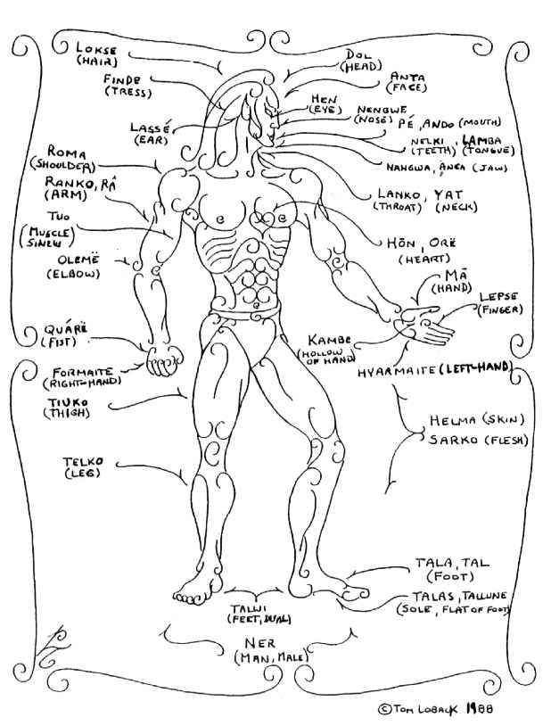 Parts of Body Name Chart Chart of Body Parts 1988